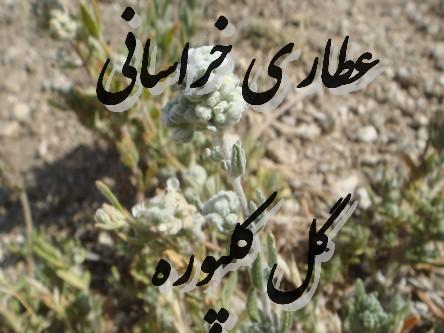 گل کلپوره (بهتربن کاهنده قند خون)