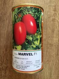 بذر کاشتنی گوجه فرنگی